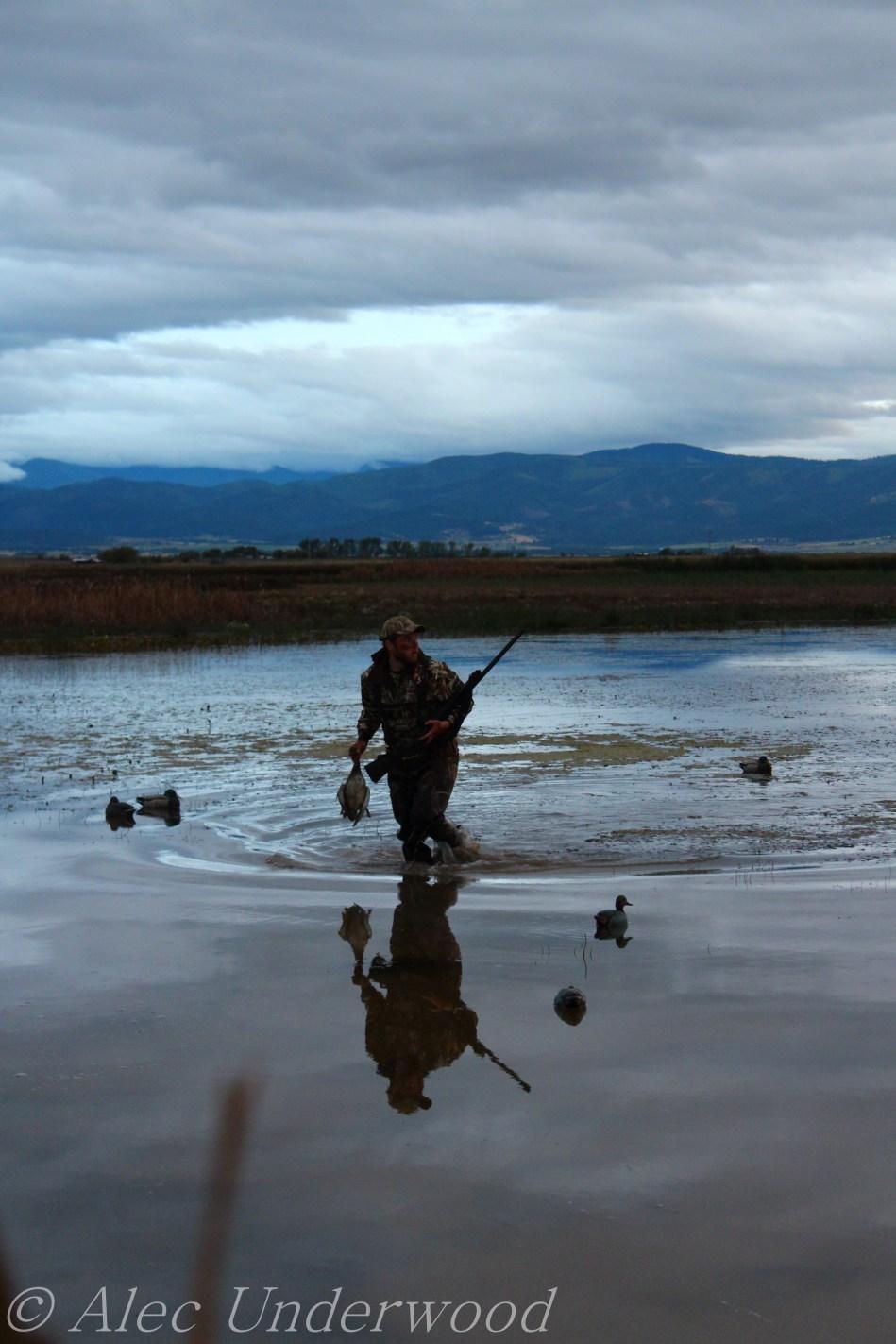 Retrieving the duck